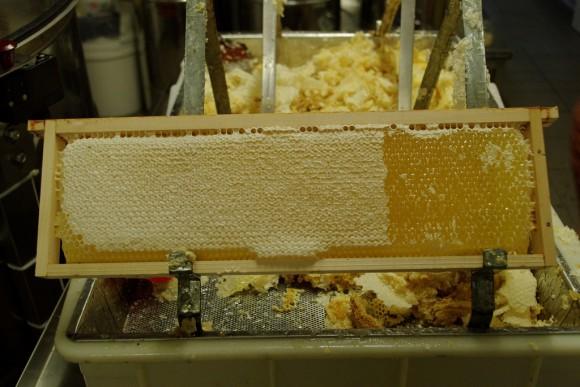 honey comb Dadant